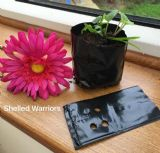 Plastic Plant pots grow your own tortoise/reptile food from seed (1)